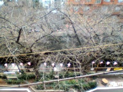 目黒川のライブカメラ