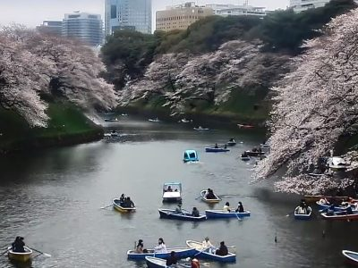 千鳥ヶ淵のライブカメラ 桜の開花状況