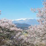 高遠城址公園のライブカメラ 桜の見頃、開花状況 【2020年】